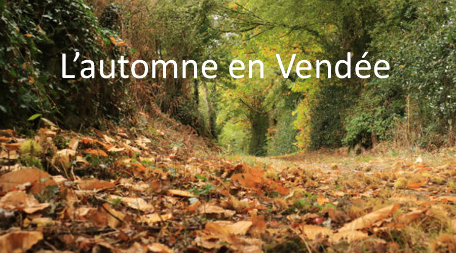 hotel ibis les herbiers visite bocage vendee automne
